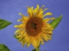 Large Sunflower with bees. Photo as Oil Painting.