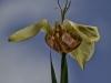 Exotic Tulip, fair sky background.