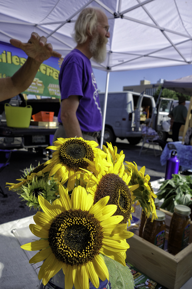 Wahoo Sunflowers at the Farmers' Market, Maryville, Tennessee.