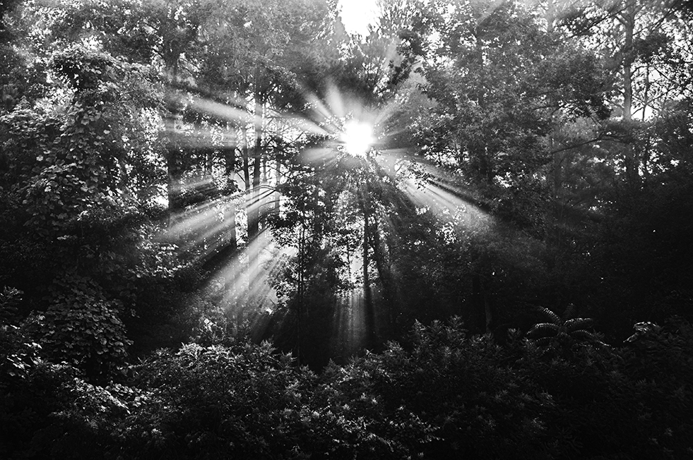 Morning sun through the trees.
