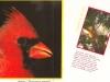 cardinalsr