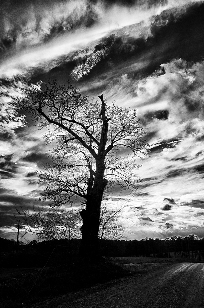 Barren tree along a farm road in Piedmont of North Carolina.