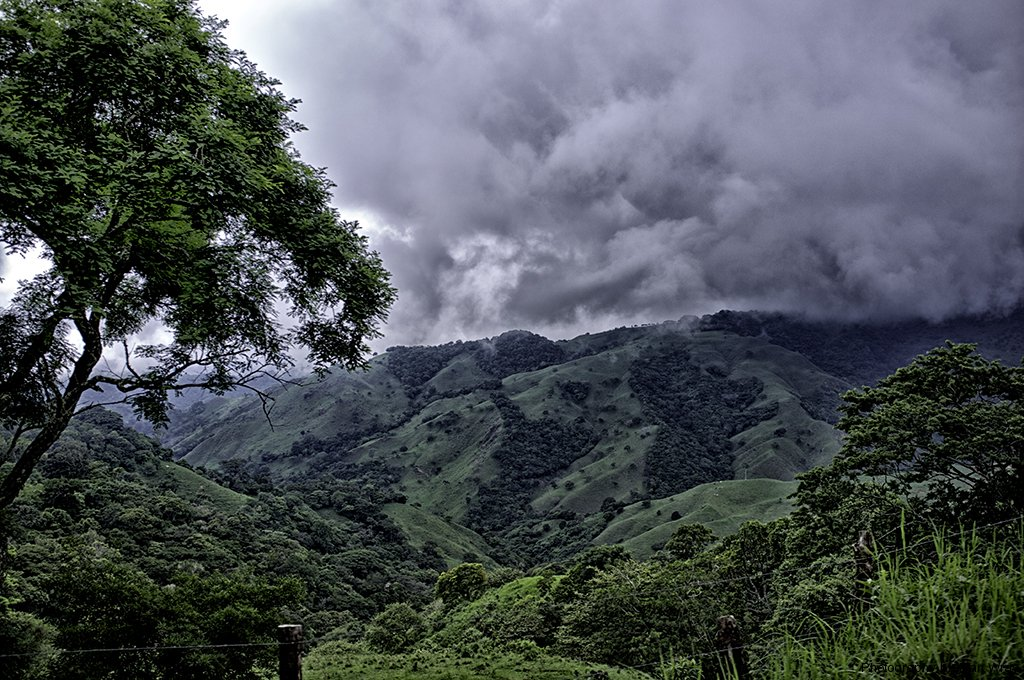 The Cloud Forest region, Monteverde, Costa Rica. There are estimated to be over 4000 plant species in the cloud forest biological sphere. The region is also known for cattle ranching.