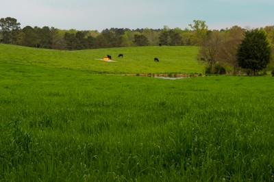 Pastoral scenic in Montgomery county, North Carolina.