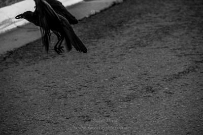 Raven leaving.