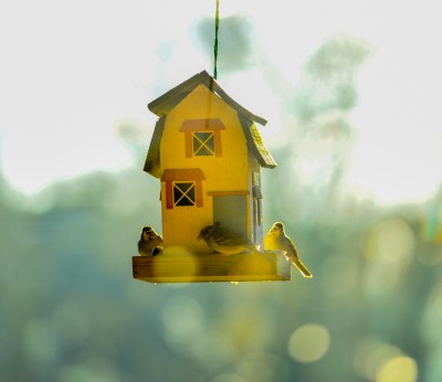 Birds at a feeder backlit by the morning sun, Piedmont of North Carolina.