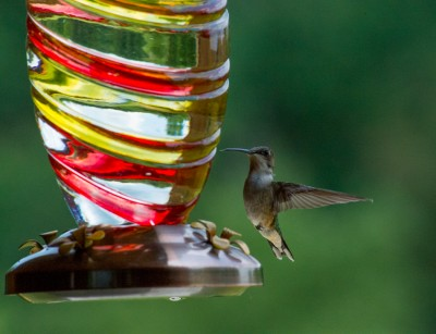 Ruby-throated Hummingbird at feeder, High ISO.