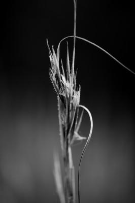 Frost on wild grass.