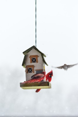 Birds at feeder in winter.