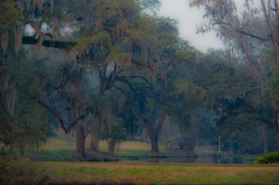 Landscape on the grounds of Mepkin Abbey in South Carolina.