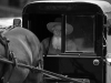 Amish Man driving carriage