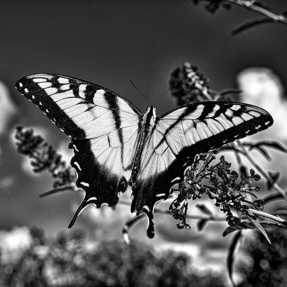 nature in black and white photography by dan wray